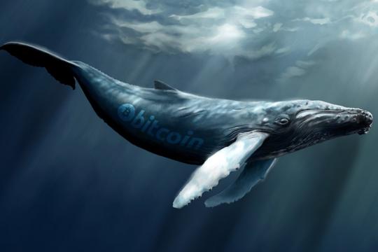 نهنگ خرسی BEARWHALE